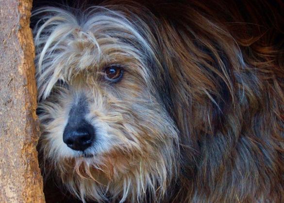 Черкащанам пропонують забрати додому милу собачку