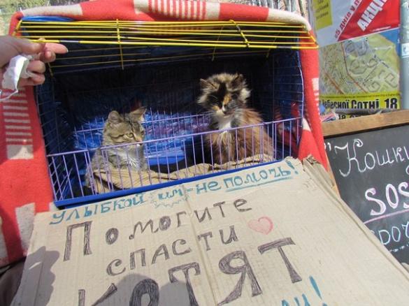 У Черкасах просять допомогти врятувати тварин