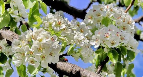 Черкаси квітують: захоплюючі світлини з'явилися в мережі (ФОТО)