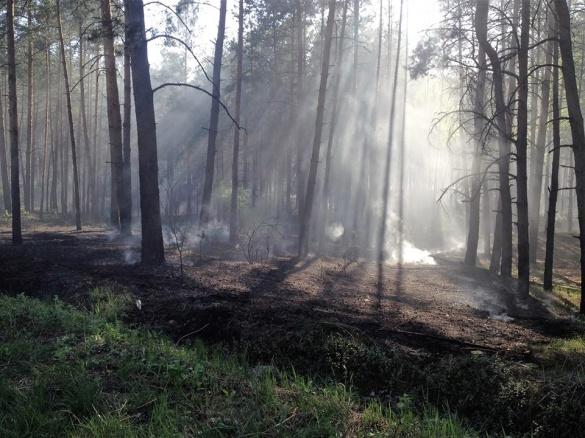 У лісі на Черкащині виникла пожежа (ФОТО)