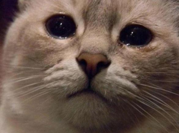 У Черкасах кіт вже тиждень знаходиться у вентиляційній шахті, з якої не можуть його врятувати