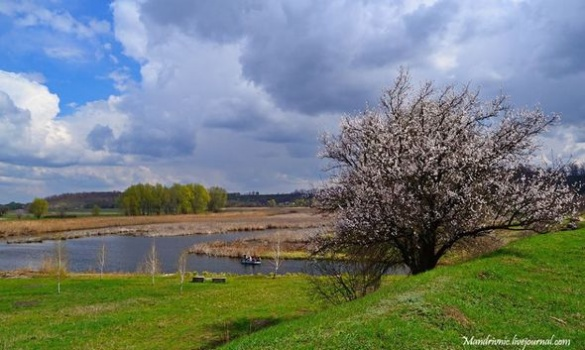 Кольори весни: черкаський фотограф показав дивовижну красу квітів (ФОТО)