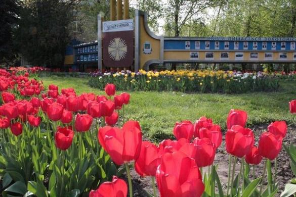 Майже Нідерланди. Тисячі сортових тюльпанів розцвіли на Черкащині (ВІДЕО)
