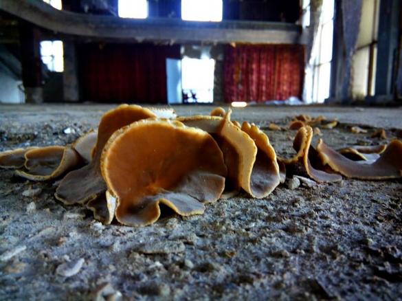 У черкаському театрі почали рости гриби (фотофакт)