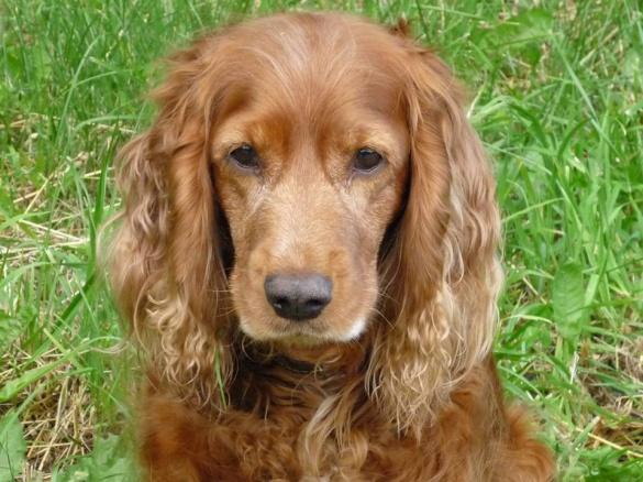 У Черкасах шукають господаря собаки