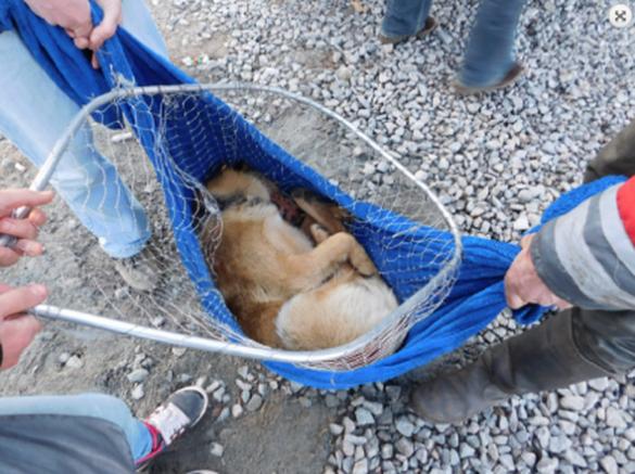 Для порятунку уманського пса-безхатька залучили команду з Києва