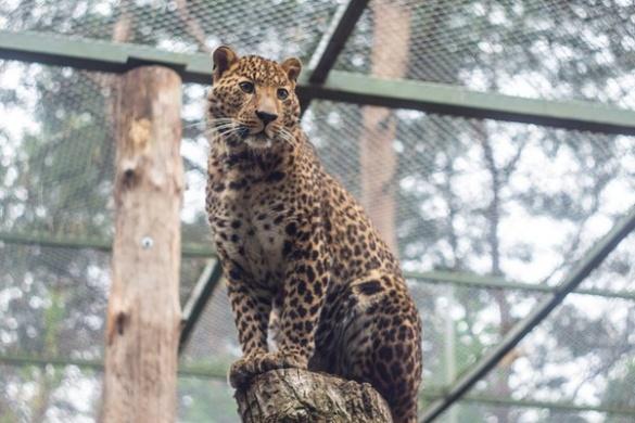 15 неймовірних фотографій мешканців черкаського зоопарку
