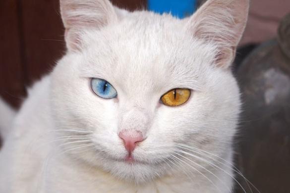 У родини черкащанки живе особливий кіт (ФОТО)