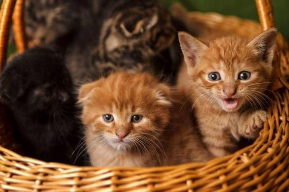 Депутат Черкаської міської ради роздає котів