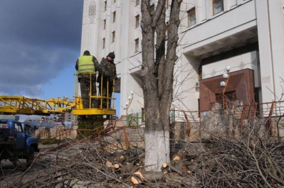 На черкаських вулицях щомісяця зрізають 80 дерев