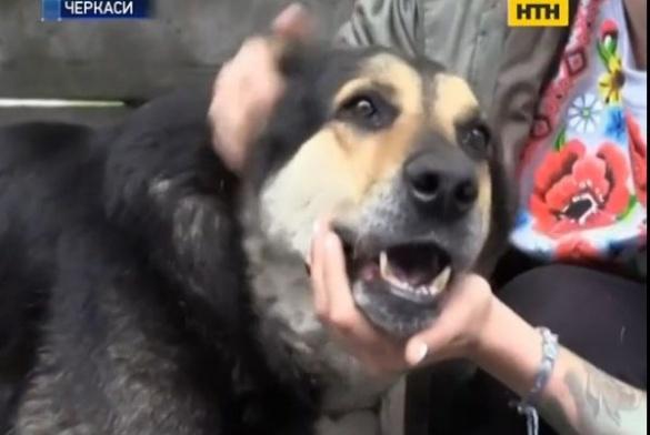 У Черкасах собакам із притулку не виділили препарат проти сказу