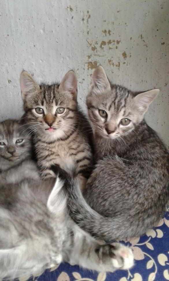 Для маленьких кошенят в Черкасах шукають домівку
