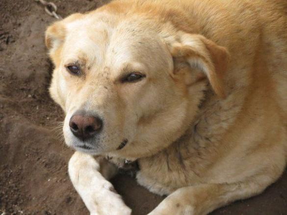 Черкащанка просить допомогти знайти свого пса (ФОТО)