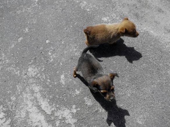 Черкащанин шукає домівку для двох кумедних цуценят (ФОТО)