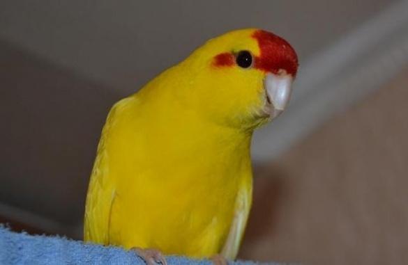У Черкаському зоопарку поселилися нові екзотичні птахи
