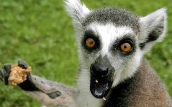 Злочинці пограбували черкаський зоопарк