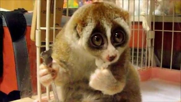 Із черкаського зоопарку викрали тварину