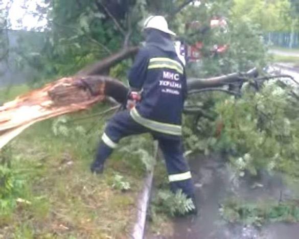 На Черкащині на проїжджу частину впало дерево (ВІДЕО)