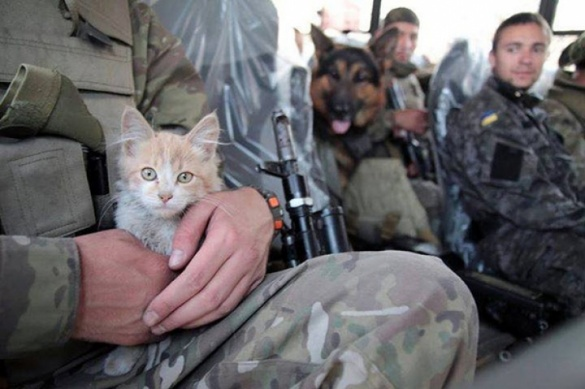 Черкаському бійцю у зоні АТО виживати допомагали коти