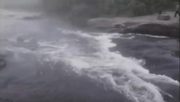 На Черкащині зафіксували дивовижні кадри ходи риби на нерест (ВІДЕО)