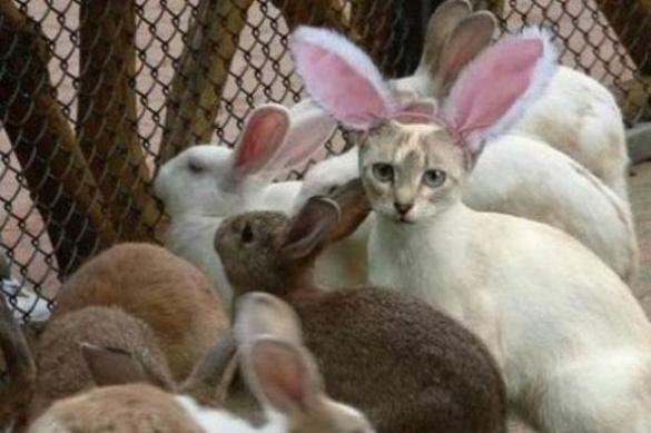 На черкаському ринку жінці замість кролятини продали… котятину