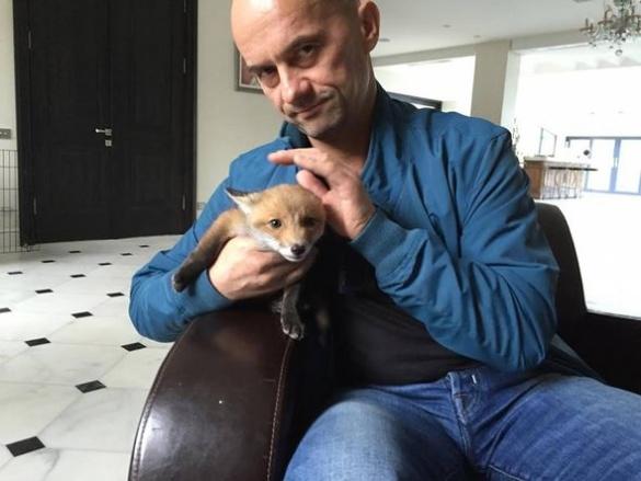 Черкаський нардеп взявся за виховання лиса на ім'я Карліто (ФОТО)