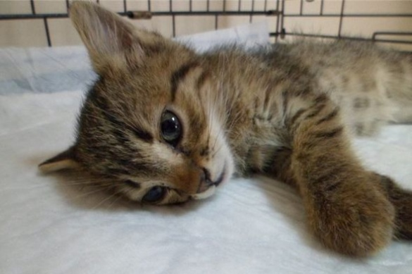 Теплої домівки та лагідного господаря потребує проопероване кошеня в Черкасах