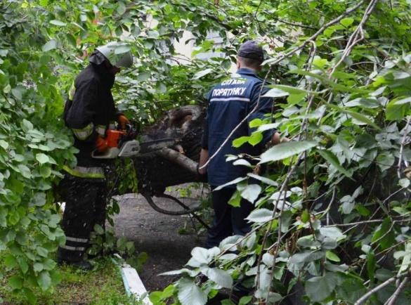 У Черкасах старе дерево впало на припаркований автомобіль