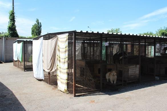Хвостаті мешканці черкаського притулку страждають від спеки
