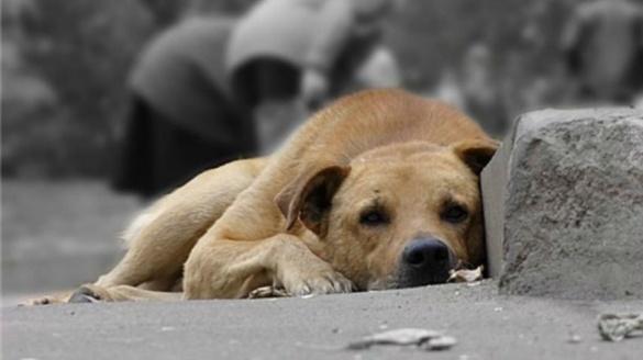 Отруєння собак у Черкасах: поліція розслідує справу, а містянам за ім'я винного обіцяють винагороду