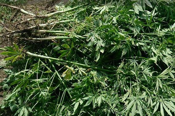 Поліція вилучила у черкащанина понад 2 кг наркотиків (ФОТО)