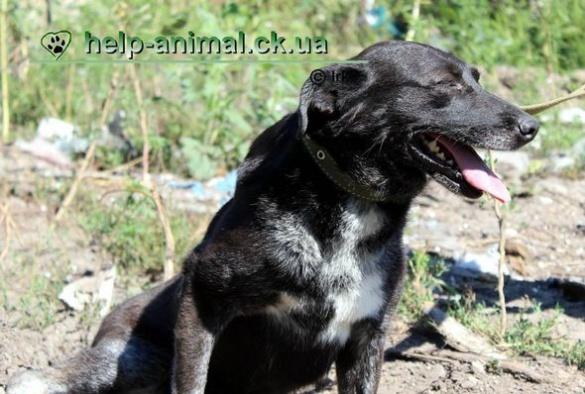 Черкаські волонтери шукають господаря для  собачки (ФОТО)