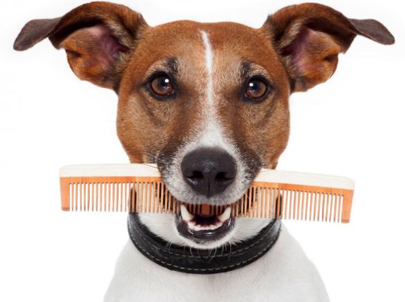 У Черкасах котам та собакам господарі роблять модні літні зачіски