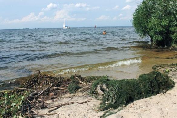 Купальний сезон по-черкаськи: зелені водорості, дохла риба і купи сміття