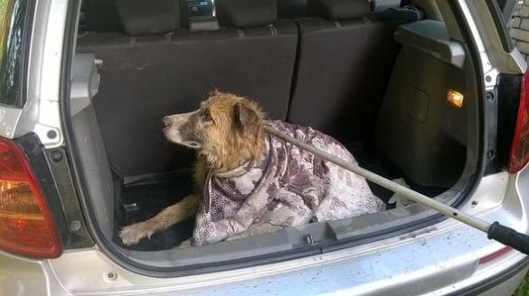 У Черкасах розшукують господаря загубленої собаки
