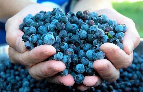 У Черкасах жінка хотіла продати на ринку радіоактивні ягоди