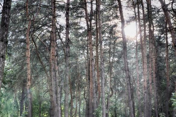 Шервудський ліс по-черкаськи: у мережі з'явились захоплюючі світлини