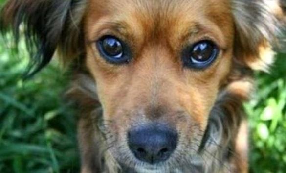 В Умані на притулок для собак витратять 2,5 млн грн