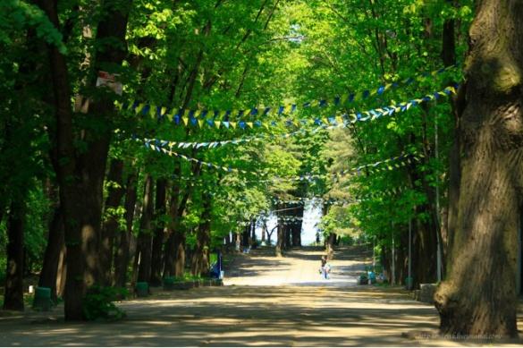 У черкаському парку майстри створять