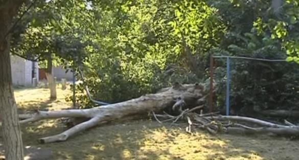 У Черкасах трухляве дерево впало посеред двору, де гралися діти