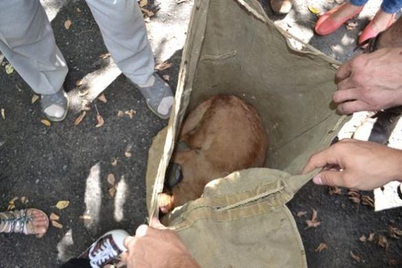 Черкаські волонтери розповіли про стан собаки, якого врятували з вигрібної ями