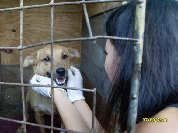 Врятованого на Черкащині пса годують м'ясом та привчають гуляти