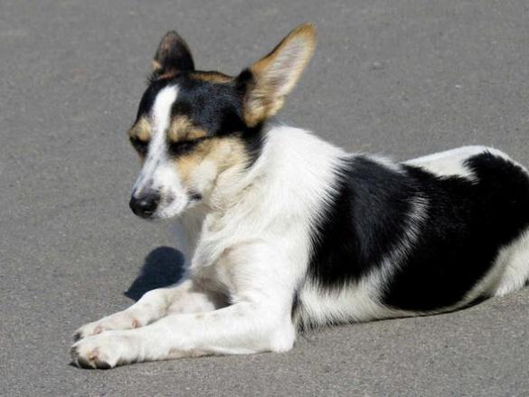 Черкаські волонтери хочуть перетворити безпородних собак на моделей