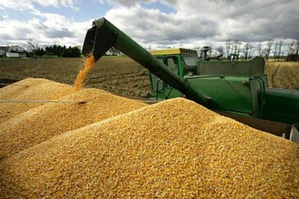 Черкащина у трійці лідерів за врожайністю зернових в Україні