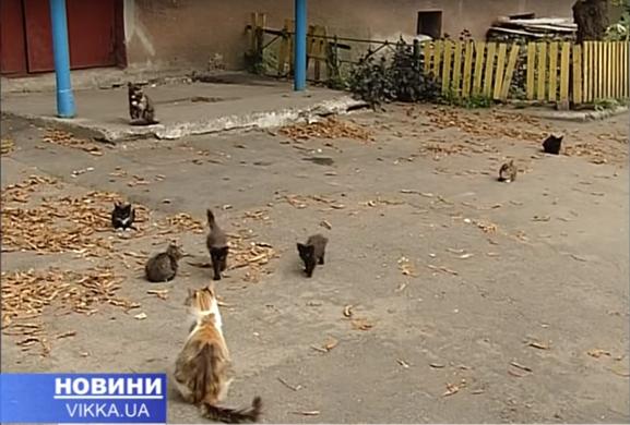 Один із черкаських дворів окупували коти (ВІДЕО)