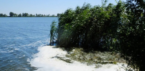 Кременчуцьке водосховище забруднене цинком, хромом та важкими металами