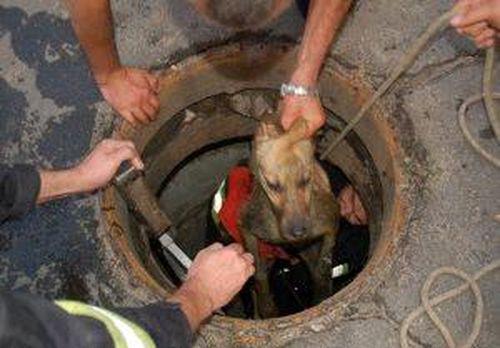 На Черкащині рятувальники із каналізації визволяли собаку