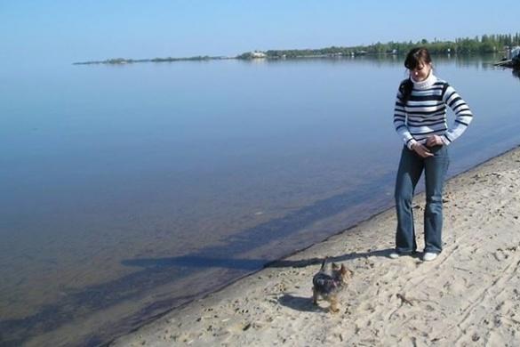 Черкащанка одягає песиків по всій Україні і навіть за кордоном