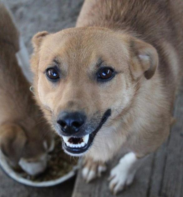 Славнозвісний пес Дігер повернувся до нормального життя (ФОТО)