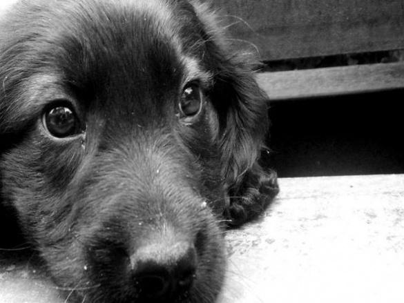 На Черкащині чоловік жорстоко бив власного пса (ВІДЕО)
